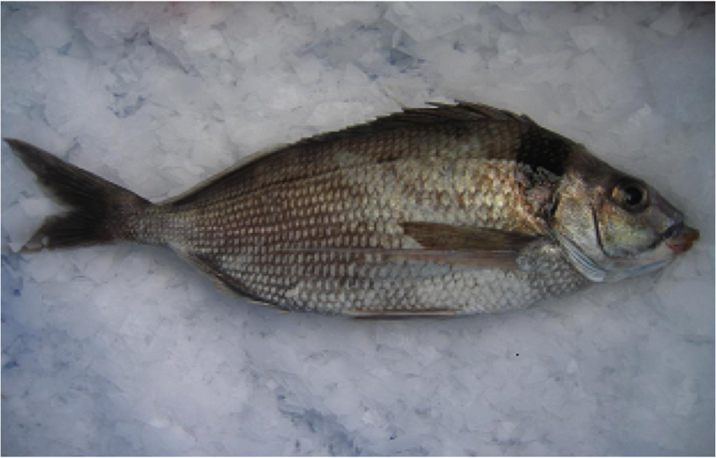 how to cook whole tarakihi fish